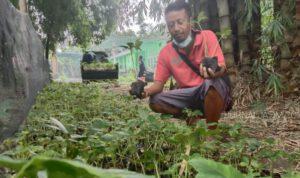 Berawal Pengetahuan Internet, Petani di Jombang sukses Budidaya Porang