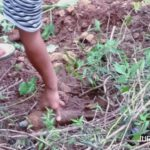 Pencari Rumput Temukan Mortir Aktif di Lereng Goa Sigologolo Jombang