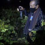Petani Cabai di Jombang Jaga Tanaman Cabai Agar Tidak Kemalingan