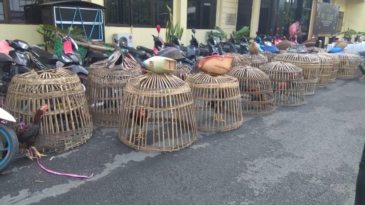 Jelang Ramadan, Polisi Gerebek 8 Lokasi Sabung Ayam di Nganjuk