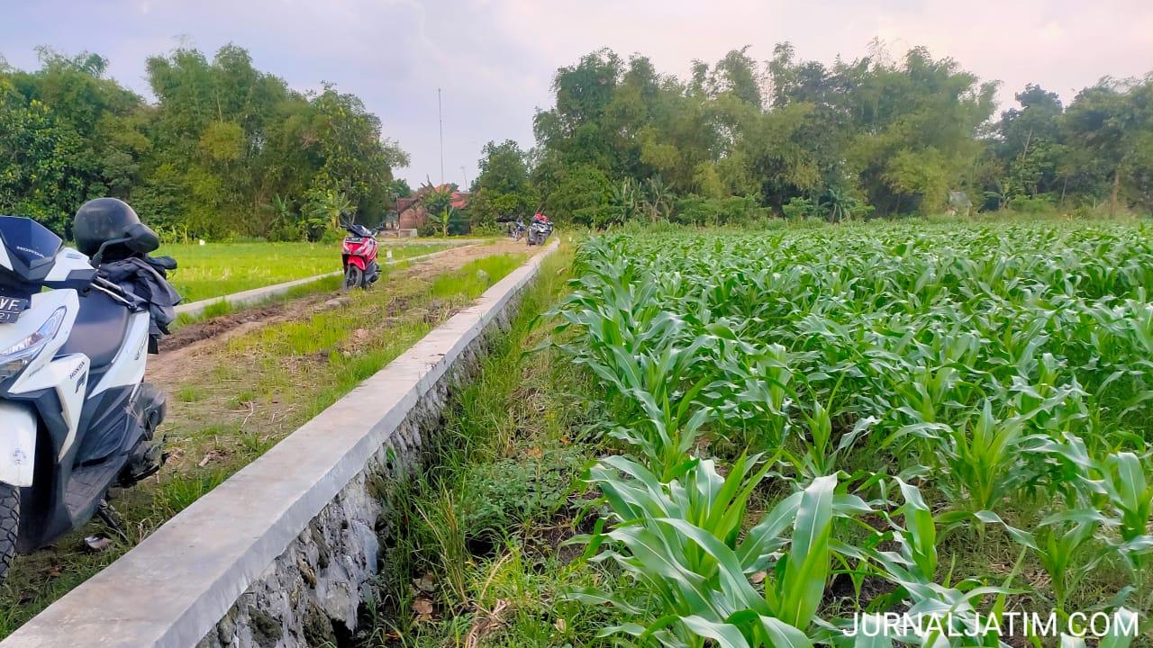 Petani Jombang Rasakan Dampak Positif Bangunan TPT di Persawahan