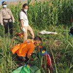 Pamit Cari Rumput, Jenazah Petani Kediri Ditemukan Terbujur Kaku Sawah