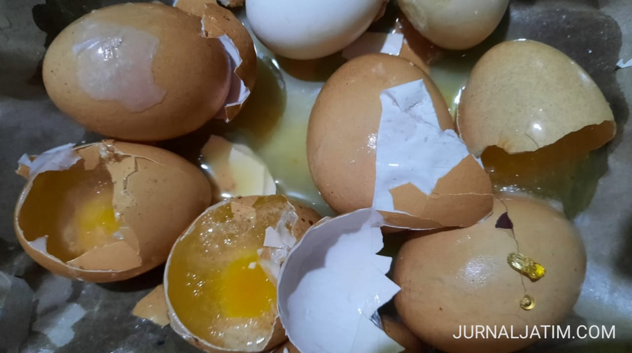 Hati-hati! Ibu Rumah Tangga di Kediri Temukan Telur Ayam Diduga Palsu
