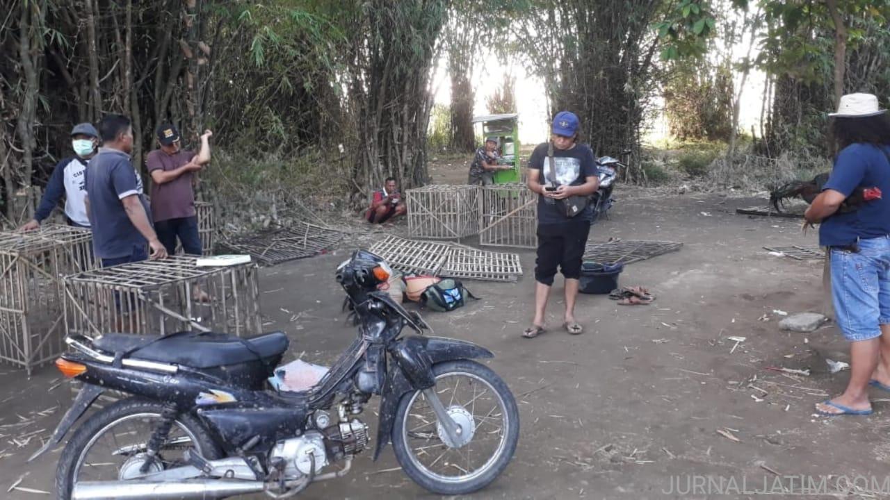 Gerebek Tempat Sabung Ayam di Nganjuk, Polisi Amankan Lima Motor