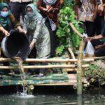 Pemkab Jombang Tebar 7000 Benih Ikan Untuk Tingkatkan Perekonomian