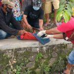 Bocah 9 Tahun Temukan Mayat Bayi Mengapung di Selokan Jombang