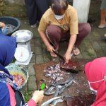 Guru di Kediri Manfaatkan Waktu Luang Ternak Ikan Lele di Kali Mati