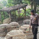 Judi Sabung di Mojowarno Jombang Digerebek, 9 Ekor Ayam Diamankan