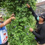 Cerita Terbentuknya Kampung Herbal di Mojoroto Kota Kediri